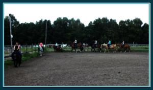 Putzen Pony, Tierpflege, Reitunterricht Kind Siefert