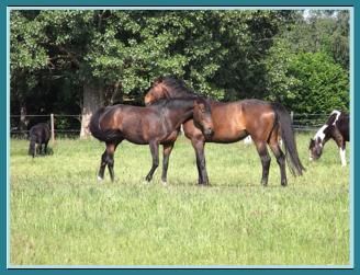 Reiterhof, Weidegang Pferd, Reitschule Tier Pflege
